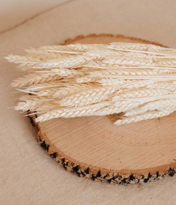 trigo blanco